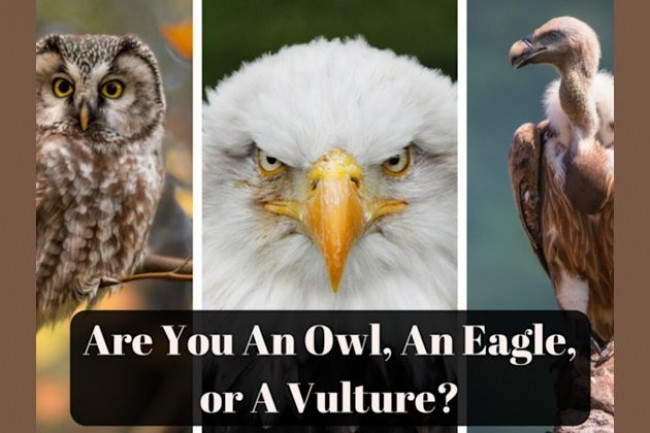 Are You An Owl, An Eagle, or A Vulture?